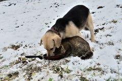 Chien et chat mangeant du même plat que des meilleurs amis Images libres de droits