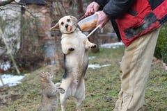 Chien et chat mangeant du même plat que des meilleurs amis Image libre de droits