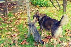 Chien et chat marchant ensemble dans le jardin Photos libres de droits
