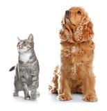 Chien et chat mignons ensemble Images stock