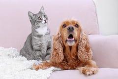 Chien et chat mignons ensemble sur le divan Image libre de droits
