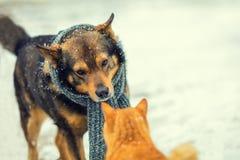 Chien et chat se reniflant en hiver Photos libres de droits