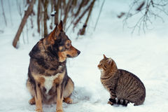 Chien et chat se reposant ensemble dans la neige Photo stock