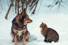 Chien et chat se reposant ensemble dans la neige Image stock