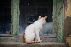 Chien et chat se reposant sur le rebord de fenêtre regardant l'un l'autre Photographie stock