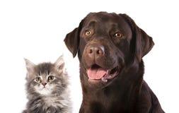 Chien et chaton Photos libres de droits