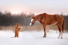 Chien et cheval dehors en hiver image stock