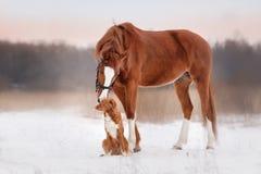Chien et cheval dehors en hiver Photographie stock