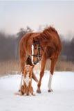 Chien et cheval dehors en hiver Image libre de droits