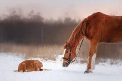 Chien et cheval dehors en hiver Photographie stock libre de droits