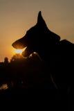 Chien et coucher du soleil Images libres de droits