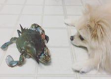 Chien et crabe Photographie stock libre de droits
