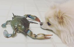 Chien et crabe 2 Photo stock