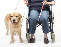 Chien et fauteuil roulant de guide d'isolement sur le blanc Photos stock