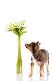 Chien et fleurs d'isolement sur le fond blanc Photo stock
