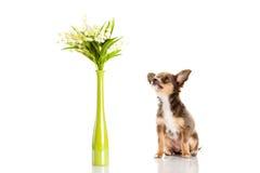 Chien et fleurs d'isolement sur le fond blanc Photos libres de droits