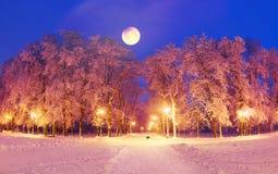 Chien et lune en parc la nuit Image stock