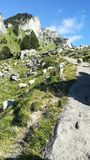 Chien et moutons de montagne Image libre de droits
