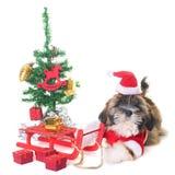 Chien et Noël image libre de droits