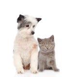 Chien et peu de chaton britannique de shorthair ensemble D'isolement sur le wh Images stock