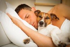 Chien et propriétaire dormant ou rêvant ensemble Image libre de droits