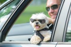 Chien et son propriétaire voyageant dans une voiture image libre de droits