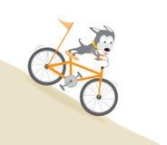 Chien faisant du vélo en descendant Images stock