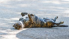 Chien fatigué, Algarve, Portugal photos libres de droits