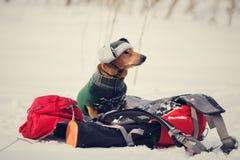 Chien fier drôle, habillé dans un manteau et un chapeau d'hiver Images libres de droits