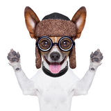Chien fou muet images stock