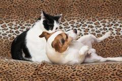Chien gentil avec le chat ensemble sur la couverture Photo libre de droits
