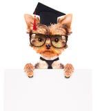 Chien gradué avec la bannière Photographie stock libre de droits