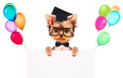 Chien gradué avec la bannière Image libre de droits