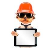 Chien habillé comme constructeur avec le PC de comprimé Photographie stock libre de droits