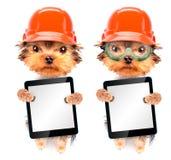 Chien habillé comme constructeur avec le PC de comprimé Photo stock