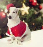 Chien habillé comme Santa Claus dans le thème de Noël photographie stock