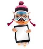 Chien habillé comme skieur avec le PC de comprimé Photos stock
