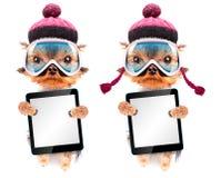 Chien habillé comme skieur avec le PC de comprimé Photographie stock libre de droits