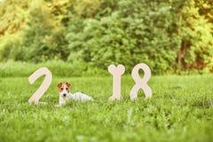 Chien heureux adorable de terrier de renard au greetin de nouvelle année du parc 2018 Photographie stock