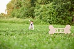 Chien heureux adorable de terrier de renard au greetin de nouvelle année du parc 2018 Image libre de droits