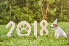 Chien heureux adorable de terrier de renard au greetin de nouvelle année du parc 2018 Image stock