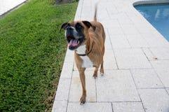chien heureux dans l'arrière cour d'une maison Image libre de droits