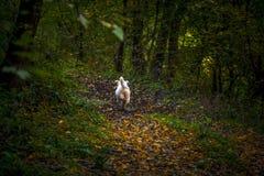 Chien heureux dans la forêt Photo stock