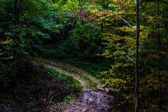Chien heureux dans la forêt Image libre de droits