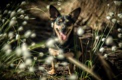 Chien heureux dans la forêt photographie stock