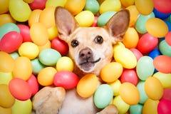 Chien heureux de Pâques avec des oeufs photo libre de droits