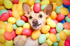 Chien heureux de Pâques avec des oeufs photo stock