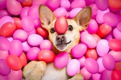 Chien heureux de Pâques avec des oeufs photographie stock libre de droits