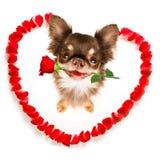 Chien heureux de valentines images stock