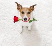Chien heureux de valentines Image libre de droits